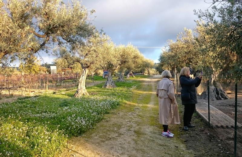 Baroque wine and olive oil tour